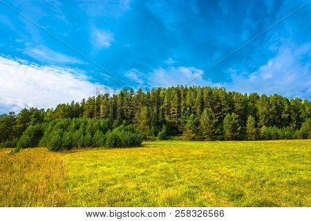 Autumn Landscape With A Pine Forest.