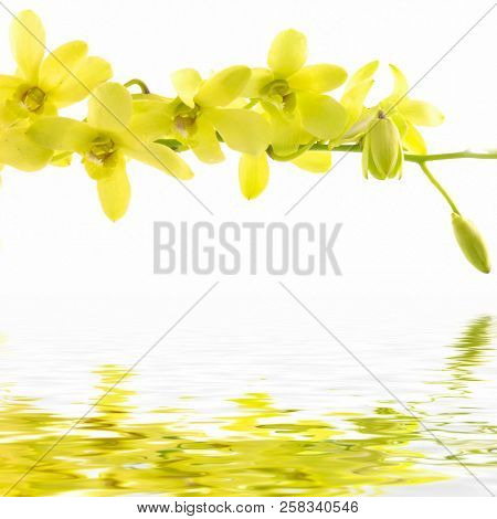 Background of yellow flower of orchid with reflection