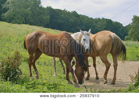 Horses Huddled