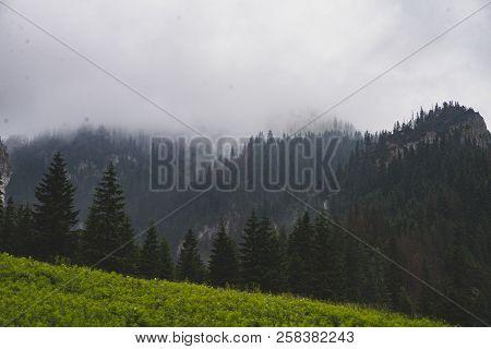 Glade And Mountains In The Valley Of Koscieliska, Tatra Mountains, Zakopane