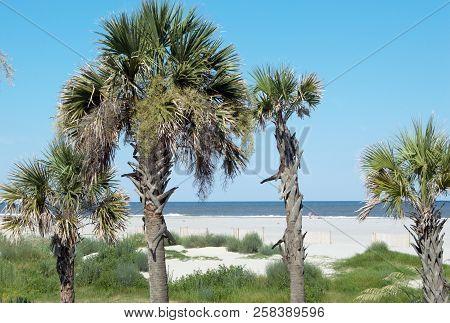Four Palm Trees Background On South Carolina Beach