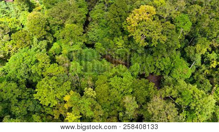 Aerial top view of the Aru island dense virgin jungle in the Maluku archipelago, between Papua and Australia.