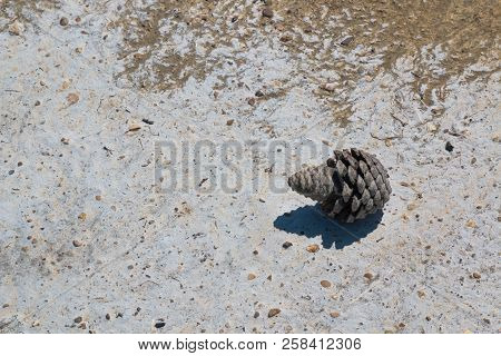 Surface Of The Sandy Beach With Stones And Pieces Of Shells And White Layer Of A Salt From The Sea.
