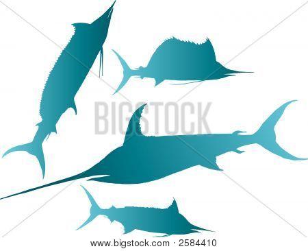 Marlin Sailfish Vector