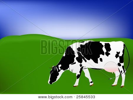 The cow of dairy breed is grazed on a green summer meadow poster