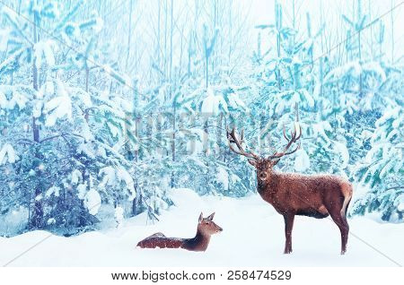 Noble Deer Male And Female In A Snowy Winter Blue Forest. Artistic Christmas Fantasy Image In Blue A