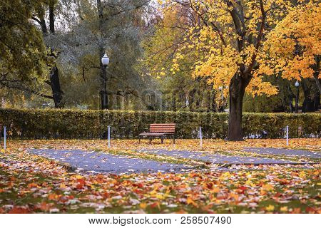 Autumn, Fall Season, Empty Lonely Wooden Brown Bench In The City Park, A Lot Of Colorful Fallen Leav