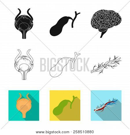 Vector Illustration Of Body And Human Logo. Collection Of Body And Medical Vector Icon For Stock.