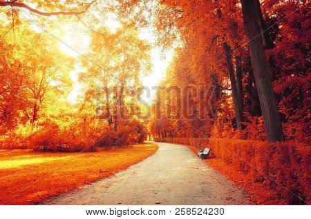 Autumn October landscape. Bench at the autumn alley under colorful desiduous trees - sunny autumn view. Autumn sunset October landscape. Autumn picturesque nature