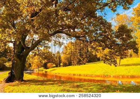 Autumn landscape of October park nature. Yellowed deciduous autumn tree at the bank of the river in sunny autumn day. Colorful autumn forest landscape