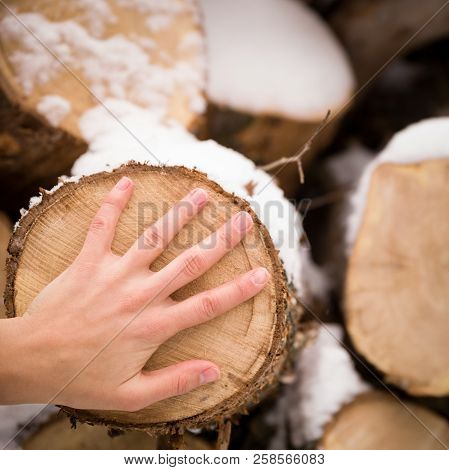 Closeup Of Woman's Hand With Pile Of Old Tree Stumps With Snow. Person Touching Tree Stump.