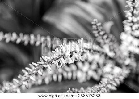 Branch With Pink Blossom, Spring. Flowers Bloom On Natural Background. Blossom, Bloom, Flowering. Sp