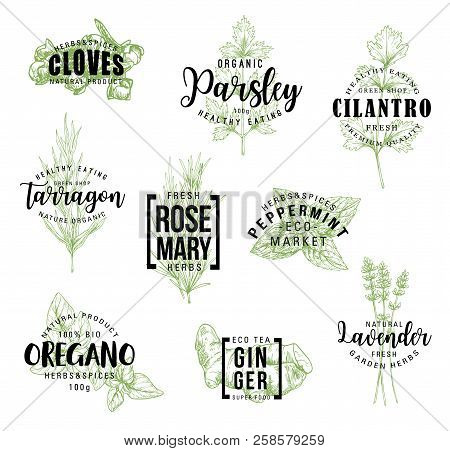 Spices And Herbs Lettering, Natural Food Ingredient Labels. Rosemary, Mint And Parsley, Ginger, Oreg