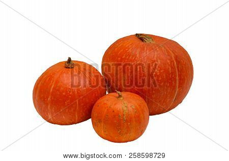Orange Pumpkins Isolated On White Background. Selective Focus.