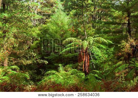 Dense thicket in the temperate rainforest, North Island, New Zealand.