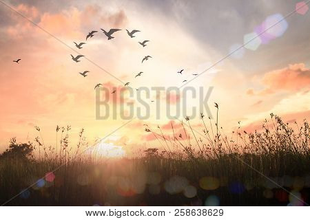 Corporate Social Responsibility (csr) Concept: Silhouette Birds Flying In Shape Of Heart On Meadow A