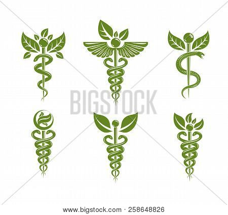 Collection Of Caduceus Illustrations Composed With Poisonous Snakes And Bird Wings, Healthcare Conce