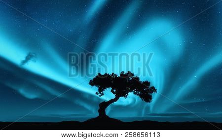Aurora Borealis And Silhouette Of A Tree On The Hill. Aurora. Northern Lights. Sky With Stars And Po