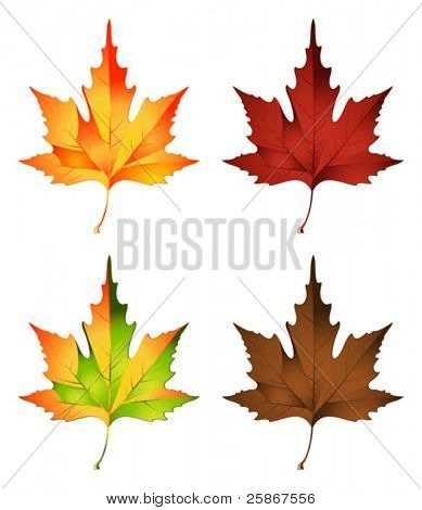 vector illustration of autumn leaf