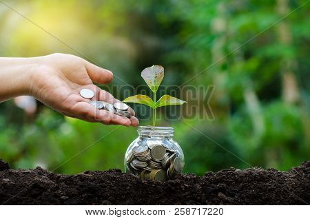 Hand Put Money Bottle Banknotes Tree Image Of Bank Note With Plant Growing On Top For Business Green