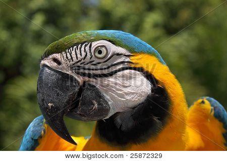 Blue Macaw Brazil