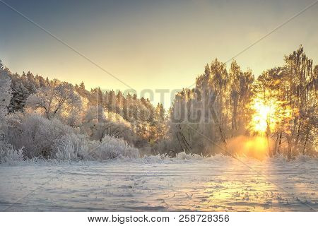 Vibrant Christmas Winter Landscape On Sunrise. Warm Sunlight In Morning Winter Nature. Frost And Fog