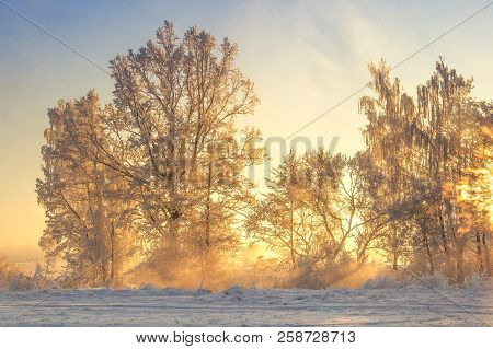 Winter Landscape In Yellow Sunlight. Scenery Frosty Nature. Christmas Background. Hoarfrost On Trees