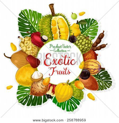 Exotic Tropical Fruits Poster. Durian, Pomelo And Quince, Cherimoya, Tamarind And Apple Cashew, Pepi