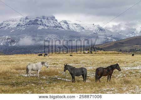 Three Wyoming Ranch Horses Standing In Grassy Field, Snow On Mountains