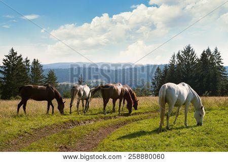 Nature Landscape With Wild Horses. Wild Horses In Nature Landscape. Mountain Landscape. Mountain Hor