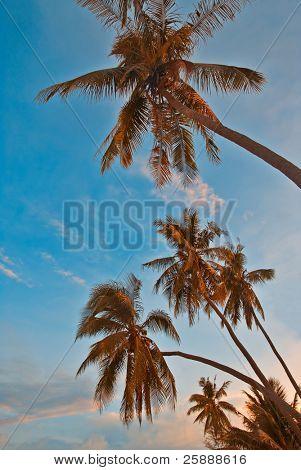 sunset palms on a beach