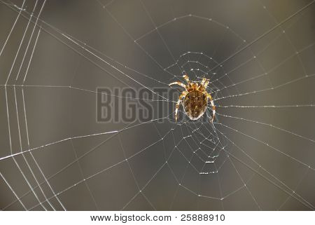 Spider in the web waiting for his victim poster