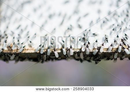 A Swarm Of Flying Ants Gather On A White Background