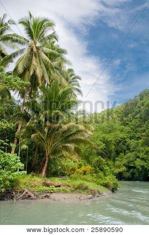A turn of a tropical jungle river