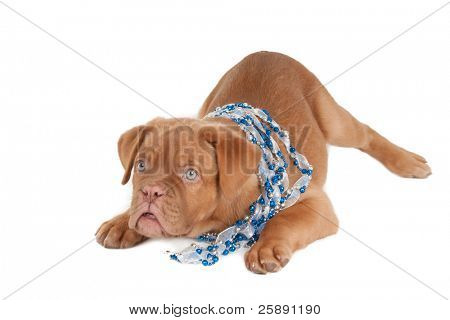 Little puppy with blue beads necklace on its neck poster