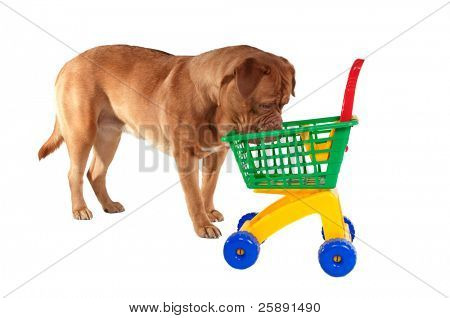 Puppy inspecting a shopping cart