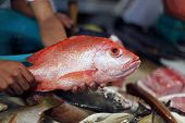 d'Talipapa fish and seafood market on Boracay island poster