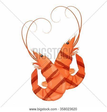 Grilled Shrimp. Tasty Fresh Cooked Fried Shrimps. Tiger Prawn. Shrimps Isolated On White Background.