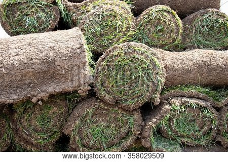 Grass Turf Roll Or Ready. Made Grass For Planting. Carpet Of Turf