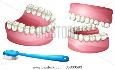 illustration of denture and tooth brush on a white background