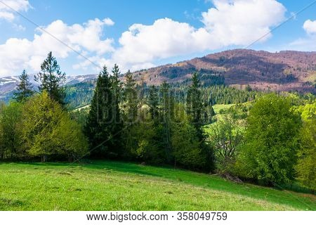 Stunning Landscape In Springtime. Row Of Trees On The Meadow. Mountain Ridge Beneath A Blue Sky With