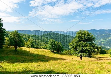 Sunny Mountain Landscape In Summer. Beautiful Scenery With Trees On A Hillside Meadow Beneath A Blue