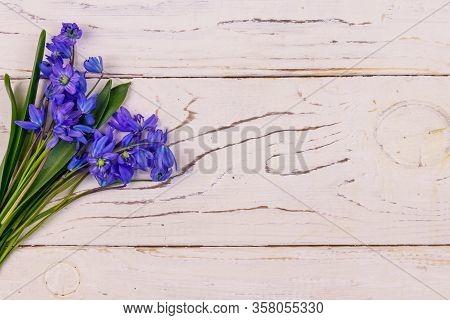Blue Scilla Flowers On White Wooden Background