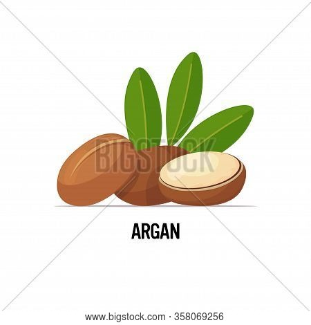 Fresh Argan Seeds Icon Tasty Ripe Nuts Isolated On White Background Healthy Food Concept Vector Illu