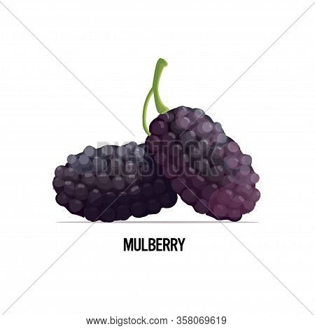 Fresh Mulberry Icon Tasty Ripe Fruit Berry Isolated On White Background Healthy Food Concept Vector
