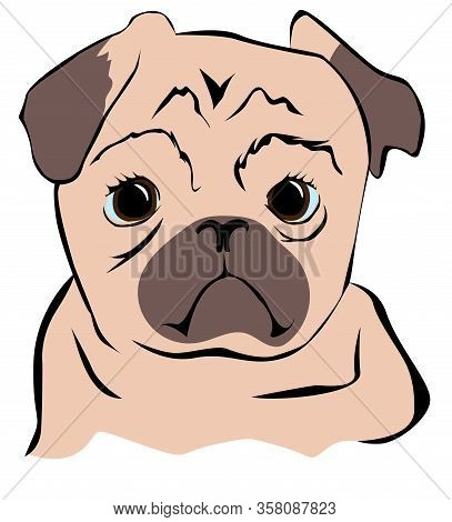 Portrait Of A Funny Pug. Cute Pug With Sad Big Eyes. Dog, Pet. Isolated On A White.