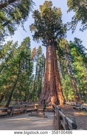 Sequoia, California/usa - October 29, 2019: General Sherman Tree - The Largest Tree On Earth, Giant