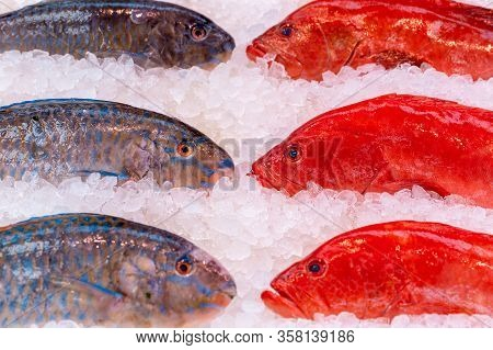 Fresh Parrotfish, Dicentrarchus Labrax, On Display On A Uk Fishmongers Market Stall