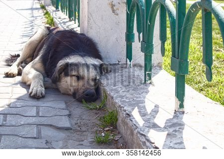 Big Dog Sleep On The Street Huddled To A Fence.