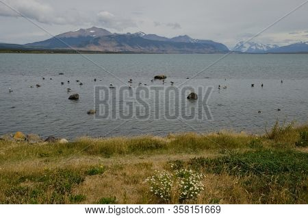 Ultima Esperanza Inlet With Upland Geese Chloephaga Picta. Puerto Natales. Ultima Esperanza Province